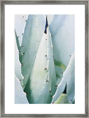 Desert Safety Framed Print by