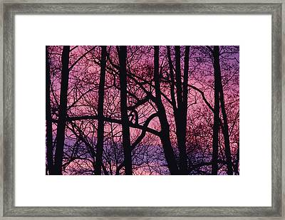 Detail Of Bare Trees Silhouetted Framed Print by Mattias Klum