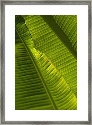 Detail Of Palm Tree Barbados Framed Print by Axiom Photographic