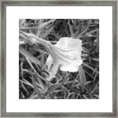 Dew Framed Print by Chasity Johnson