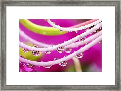 Dew Drops In Pink Framed Print by Marilyn Hunt