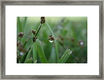 Dew Framed Print by Jessica Jandayan