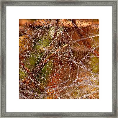 Dewdrops - Colorful Abstract Framed Print by Carol Groenen