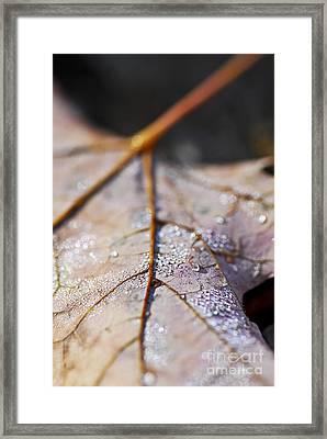Dewy Leaf Framed Print by Elena Elisseeva