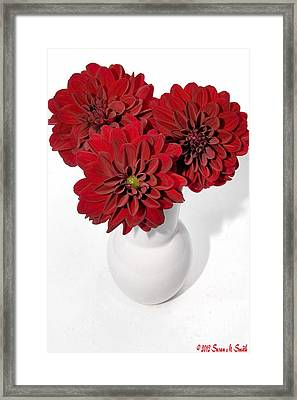 Dhalia On White Framed Print by Susan Smith