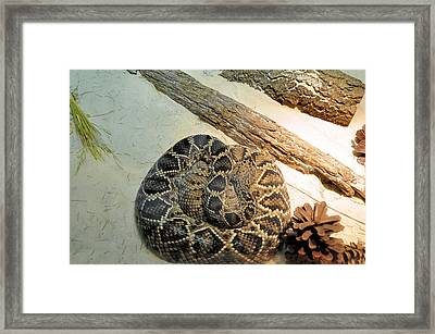 Diamond Back Rattler Framed Print by Jan Amiss Photography