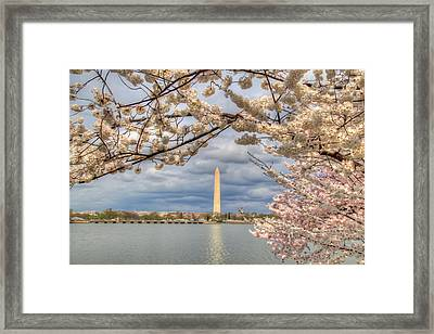 Digital Liquid - Cherry Blossoms Washington Dc 4 Framed Print by Metro DC Photography