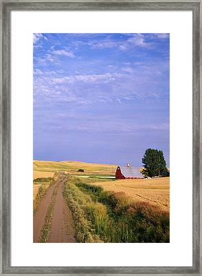 Dirt Road Through Wheat Field Framed Print by Natural Selection Craig Tuttle