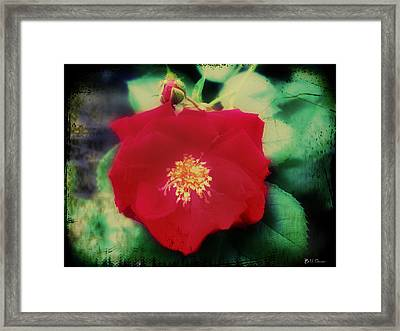 Dirty Rose Knows Framed Print by Bill Cannon