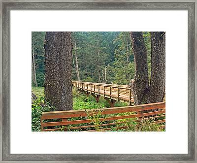 Discovery Trail Bridge Framed Print by Pamela Patch