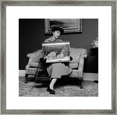 Display Pets Framed Print by Three Lions