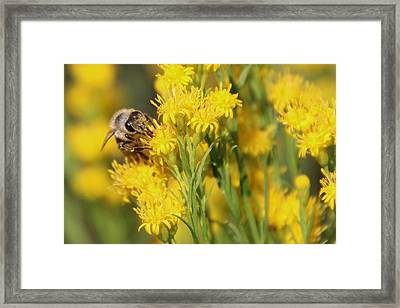 Do I Have Something On My Face Framed Print by Heidi Smith