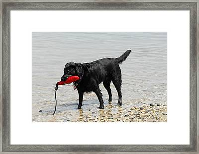 Dog 66 Framed Print by Joyce StJames
