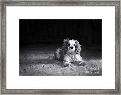 Dog Black And White Framed Print by Jane Rix