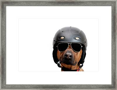 Dog Dressed As Police Man Framed Print by Ty Foster