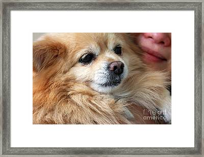 Dog First Framed Print by Charline Xia