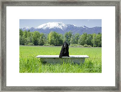 Dog In Bathtub Framed Print by Mats Silvan