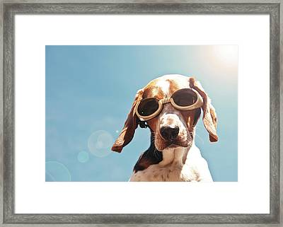 Dog In Goggles With Sun Flare Framed Print by Darren Boucher