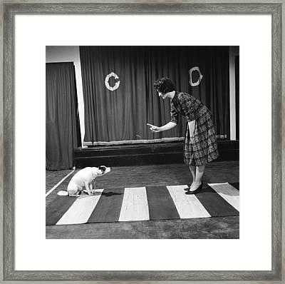 Dog On A Zebra Framed Print by John Drysdale