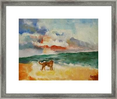 Dog On The Beach Framed Print by Susan Hanlon