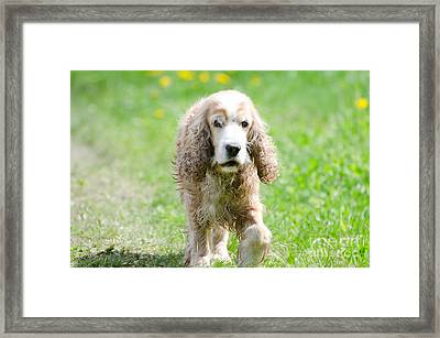 Dog On The Green Field Framed Print by Mats Silvan