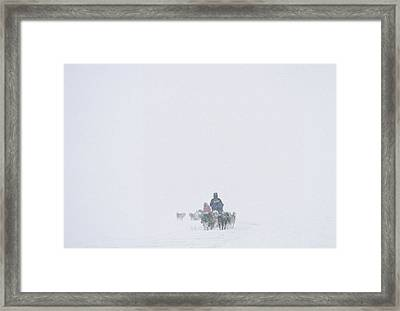 Dog Sledding Expedition In Storm Framed Print by Gordon Wiltsie