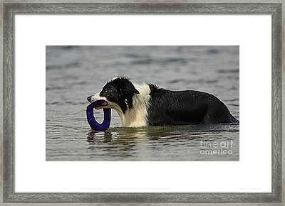 Dog To The Rescue Framed Print by Inspired Nature Photography Fine Art Photography
