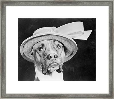Doggy Hat Framed Print by Keystone Features