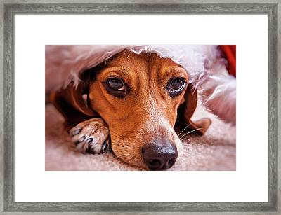 Dogs In Santa Hat Framed Print by Rich Johnson of Spectacle Photo