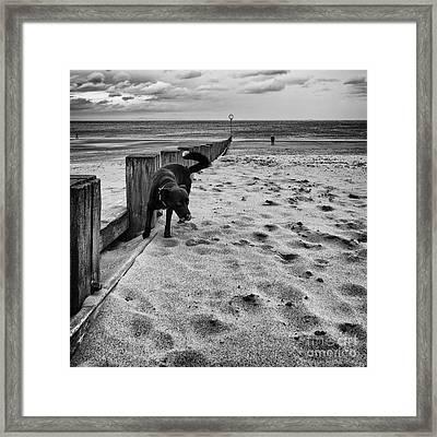 Doing What Dogs Always Do Framed Print by John Farnan