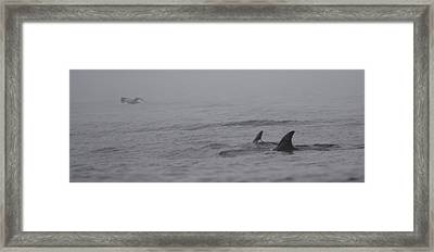 Dolphins In The Mist  Framed Print by Bruce J Robinson