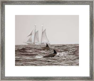 Dolphins With Ship Framed Print by Will Edwards