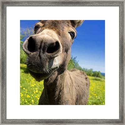 Donkey. Closeup Framed Print by Bernard Jaubert