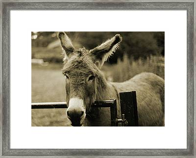 Donkey Framed Print by Dyker_the_horse_1976