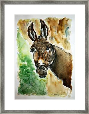Donkey Framed Print by Therese Alcorn