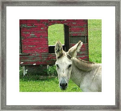 Donkey Framed Print by Todd Sherlock