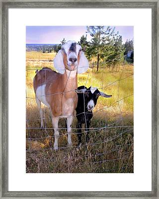 Don't Fence Me In Framed Print by Myrna Migala