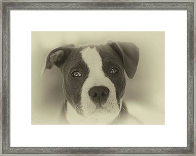 Don't Hate The Breed Framed Print by Larry Marshall