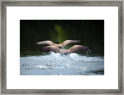 Double Landing Framed Print by Karol Livote