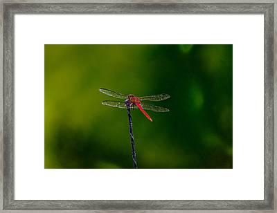 Dragon Fly At Rest Framed Print by David Alexander