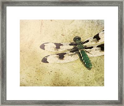 Dragon In The Sun Framed Print by Amy Tyler