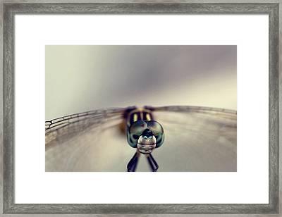 Dragonfly Art Framed Print by Joel Olives