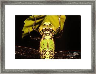 Dragonfly Closeup Framed Print by Lynda Dawson-Youngclaus