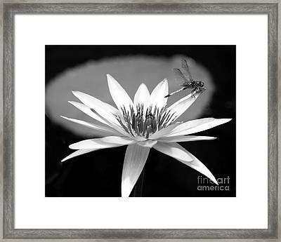 Dragonfly On The Water Lily Framed Print by Sabrina L Ryan