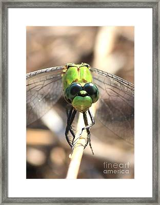 Dragonfly Perspective Framed Print by Carol Groenen
