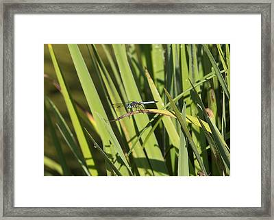 Dragonfly Framed Print by Ron Sgrignuoli