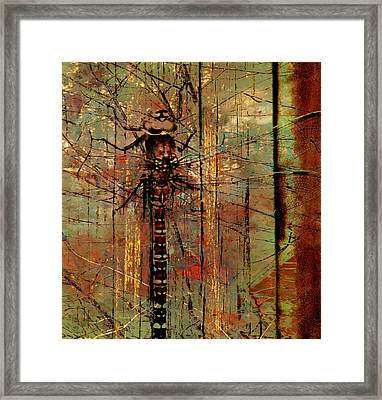 Dragons Wall  Framed Print by JC Photography and Art