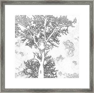 Drawing Chestnut Framed Print by Rosane Sanchez