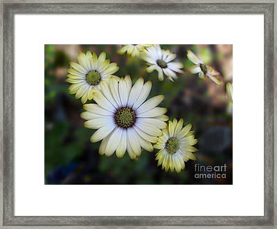 Dream Daisy Framed Print by Arlene Carmel