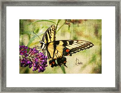 Dream Framed Print by Darren Fisher